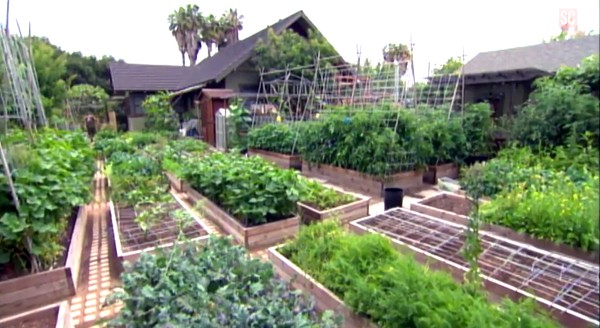 Image result for urban homestead