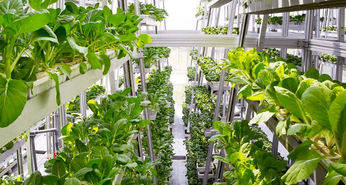 World S First Hydraulic Driven Vertical Farm Produces 1