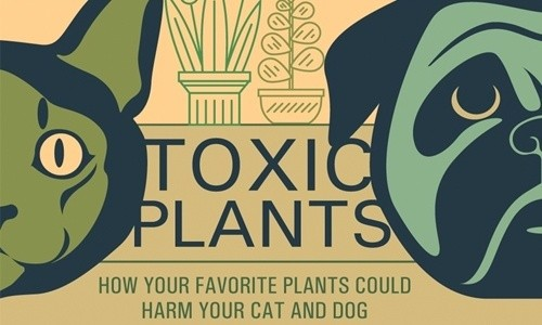 12 Most Poisonous Plants for Your Dog and Cat
