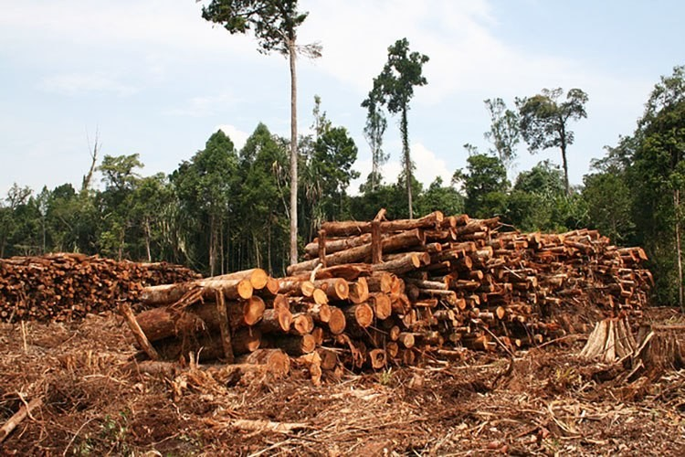 3 Ways the Marketplace Could End Rainforest Deforestation - EcoWatch