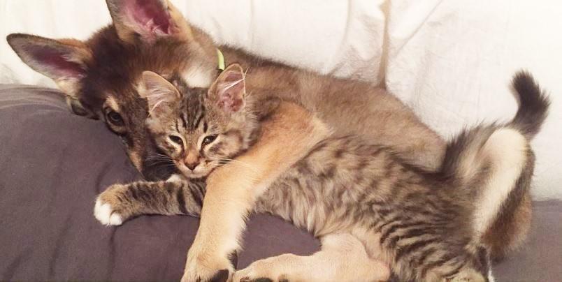 Puppy and kitten friends