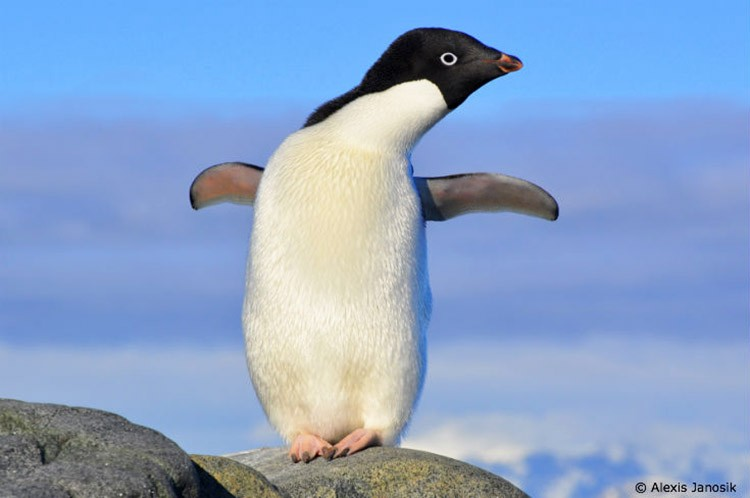 10 Fun Facts About Penguins - EcoWatch