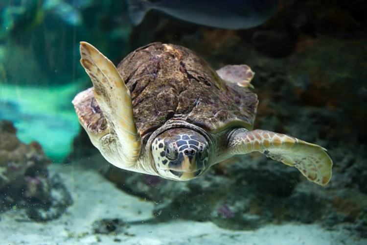 Image of: Turtle Super Cool Facts About Sea Turtles Ecowatch Super Cool Facts About Sea Turtles Ecowatch