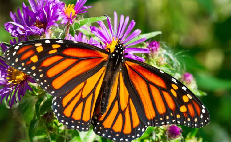 10 super cool facts about butterflies ecowatch