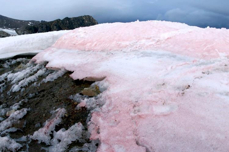 Image result for pink snow danger