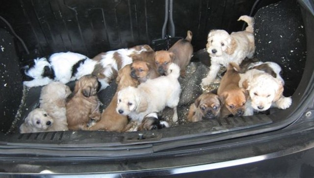 Dozens Of Puppies Found Huddled Together In Someone S Trunk