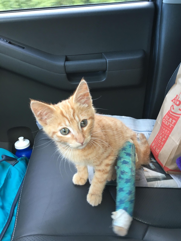 neighborhood cat brought her kitten with broken leg to couple she