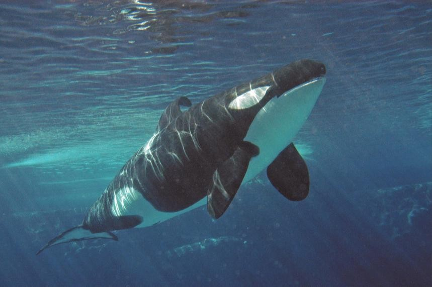 Major Schools Are Debunking SeaWorld's False Claims