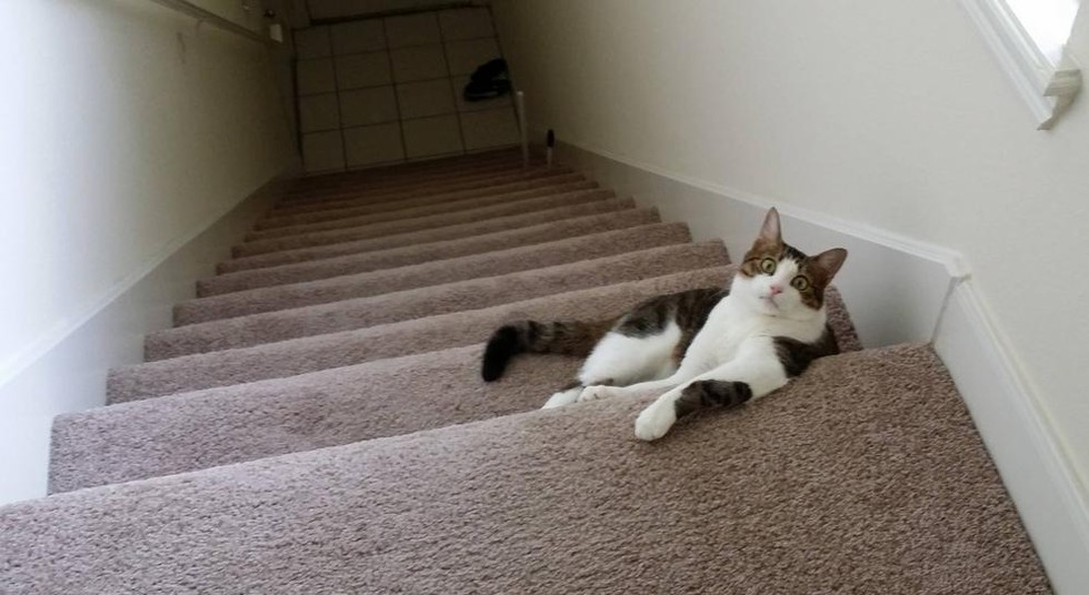 Living In An Apartment Means Your Cat Is Probably Not Used To Stairs