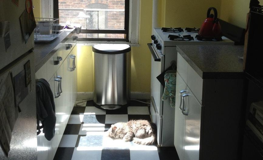 Your Cat Will Find The One Patch Of Sun In Tiny Apartment And Then Monopolize It