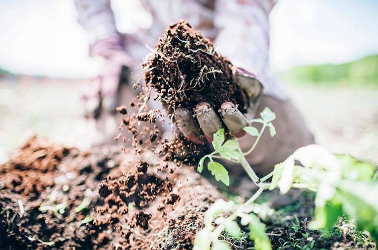 How the world s most fertile soil can help reverse climate for What is rich soil called