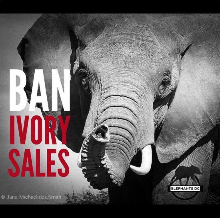 the ivory trade ban essay Calcolítico, ivory and bone technology, ivory carving, ivory trade, african elephants values, culture and the ivory trade ban the new reality of a world without ivory trade demands a re-examination of human values towards both elephants and ivory and what each has come to represent.