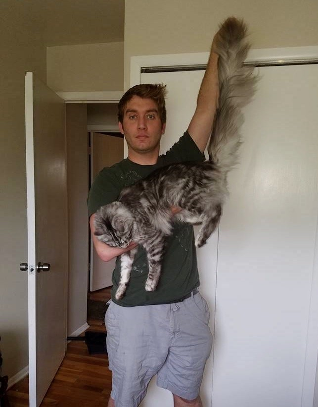this fluffy cat may have the worlds longest tail