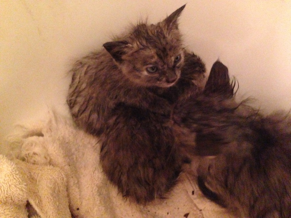 Man Saves 3 Kittens From Drowning During Storm And