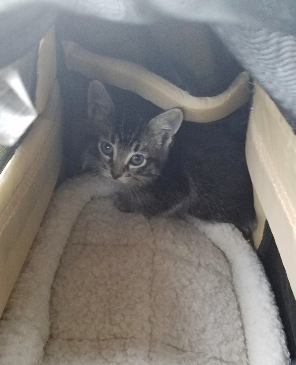 stray kitten found in abandoned building is turned around by love