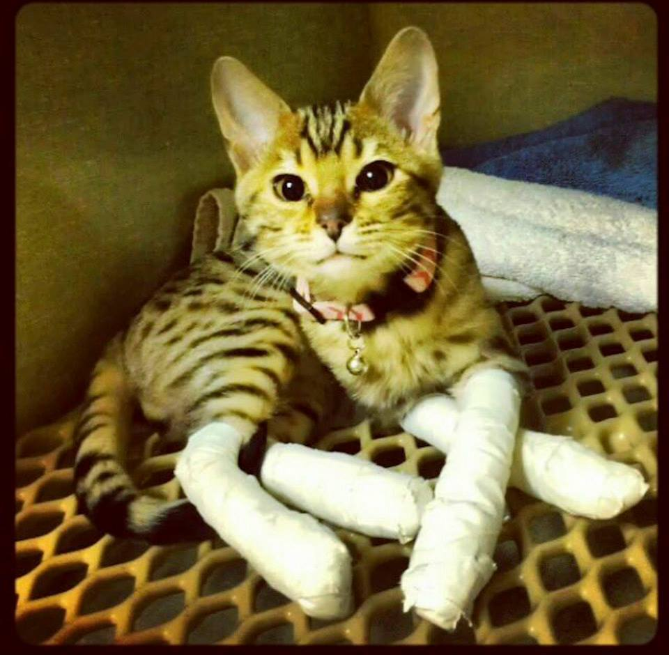 Cat Litter For Declawed Cats