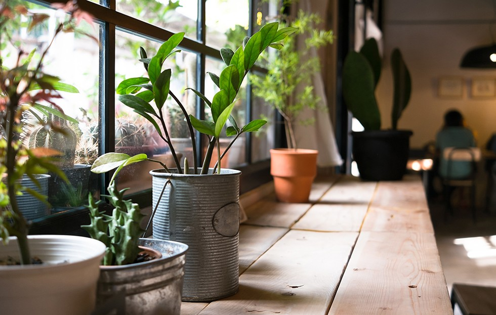 20 Plants That Improve Air Quality in Your Home