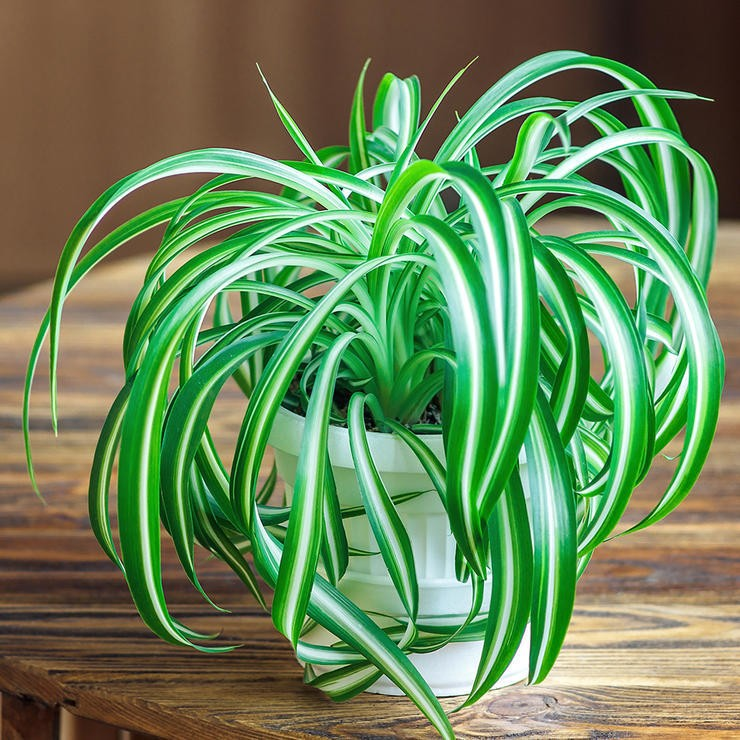 20 Plants That Improve Air Quality In Your Home EcoWatch
