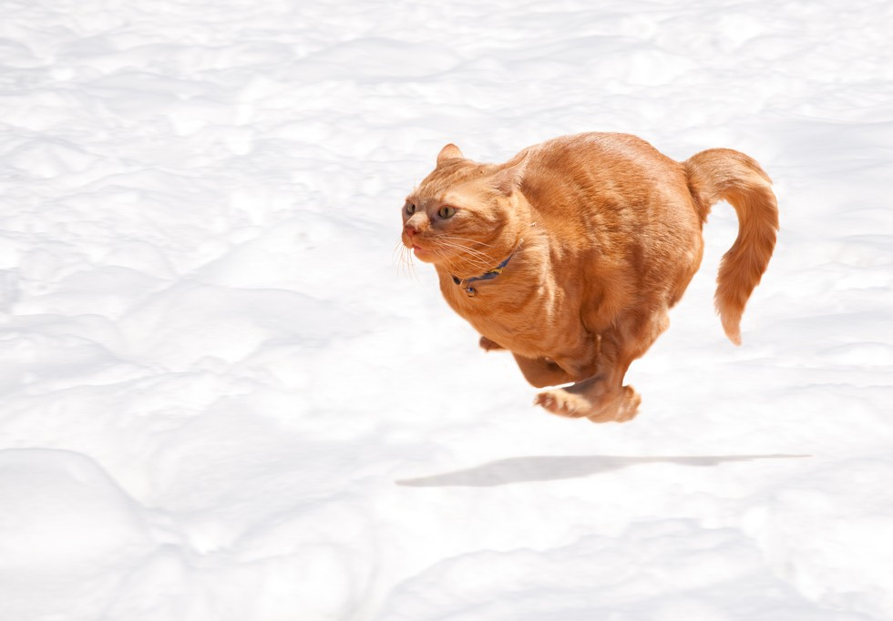 Why Cats Poop Around House