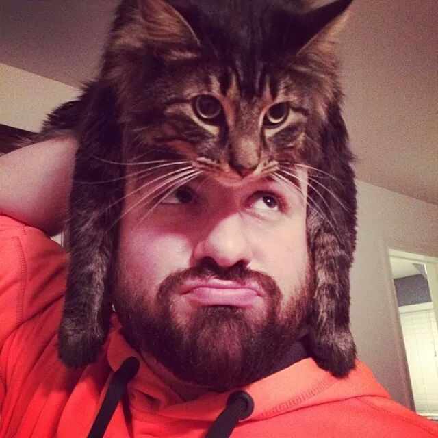Humans With Cat Heads do Cats Sit on Our Heads