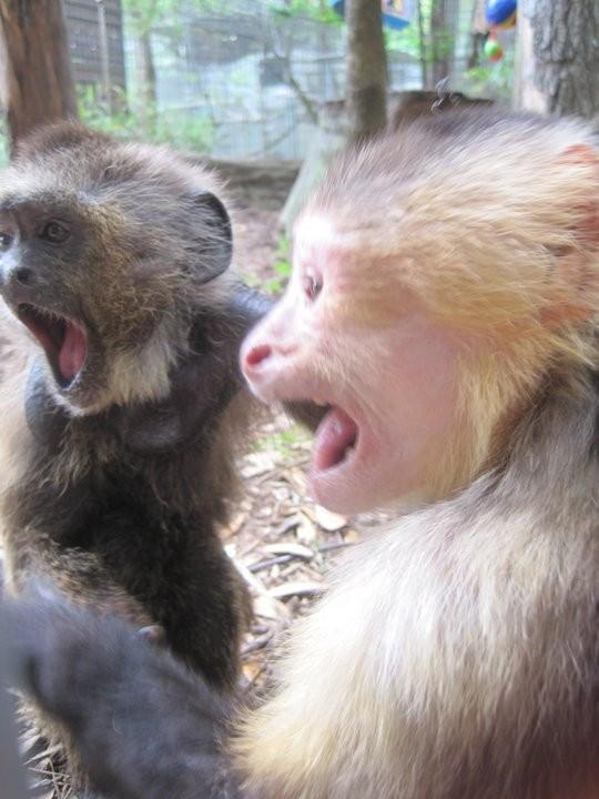 Put call option newsletter monkey