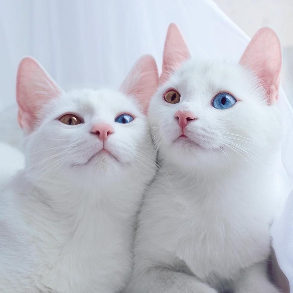 Color cats like - Photo Sis Twins