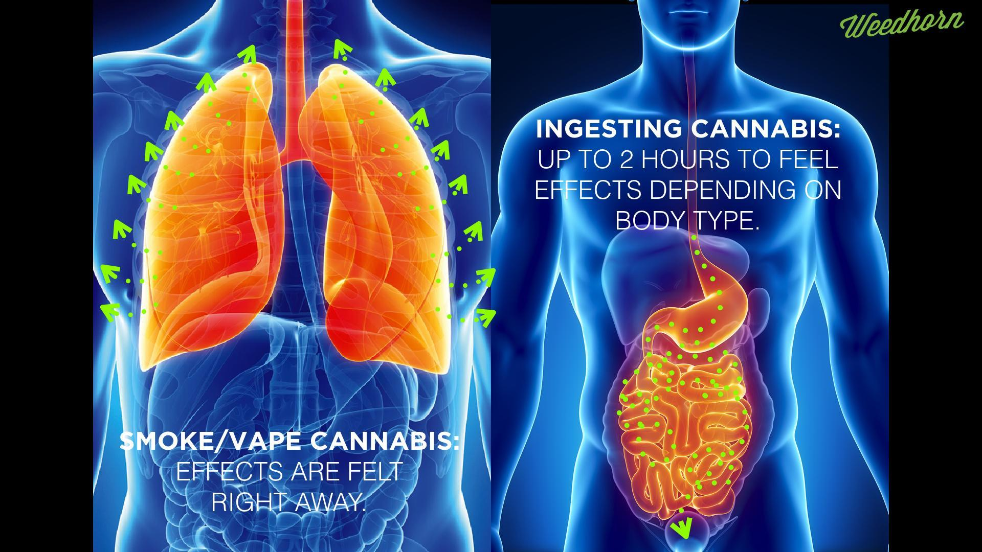The Difference Between Inhaling and Ingesting Cannabis