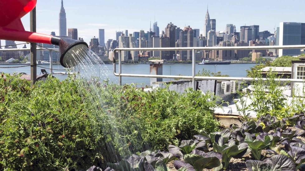 Urban Farming Is Revolutionizing Our Cities Ecowatch