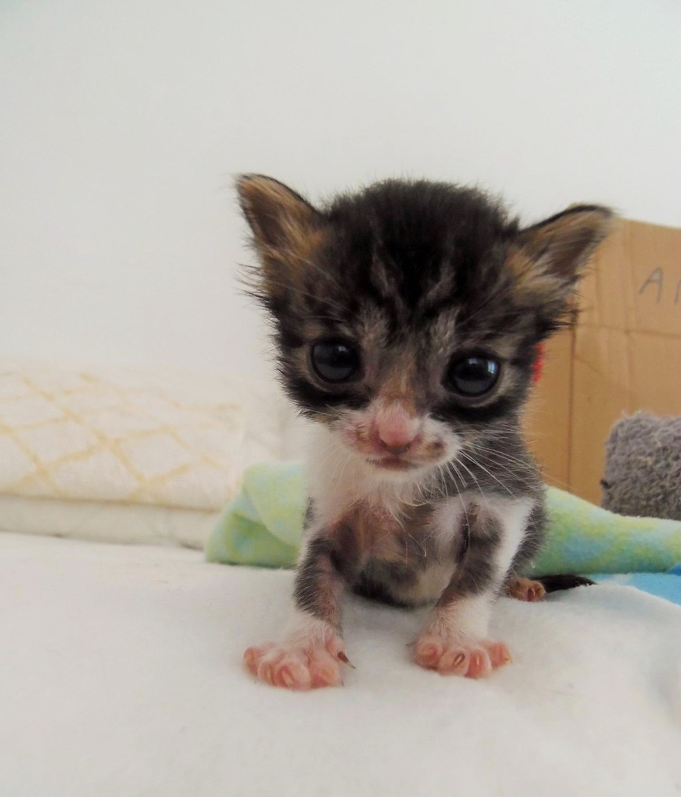 Tiniest Orphaned Kitten Found in Field Cries Out for Love Then
