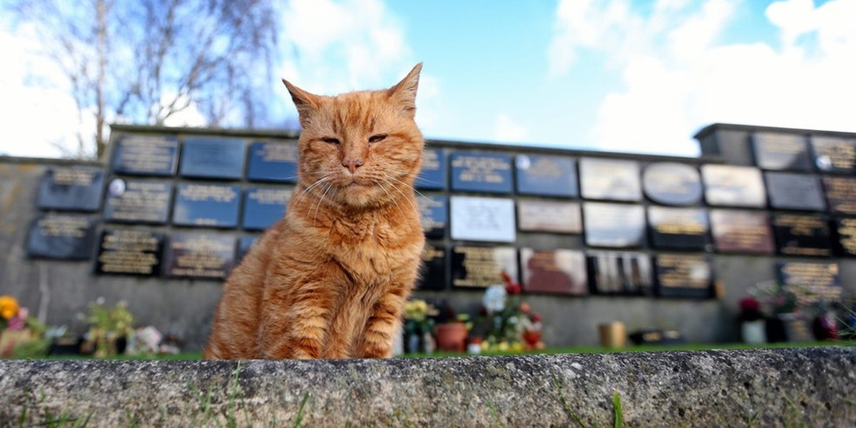 Cemetery Cat, Who Provided Comfort to Mourners for Over 20 Years, Has Passed
