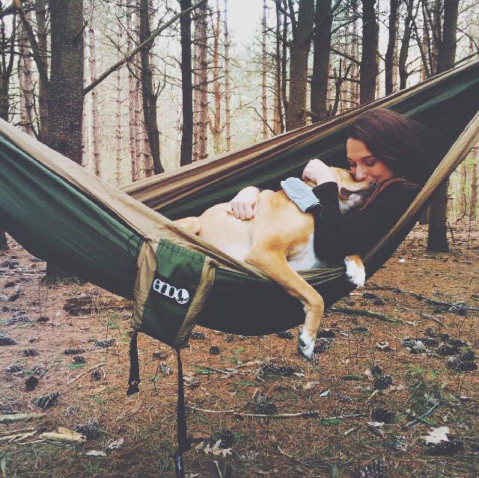 What To Pack For A Road Trip With Your Dog