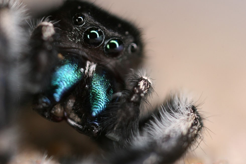 A Spider Across The Room Can 'Hear' You, Study Finds