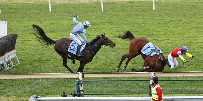 These Horses All Died On The Same Racetrack