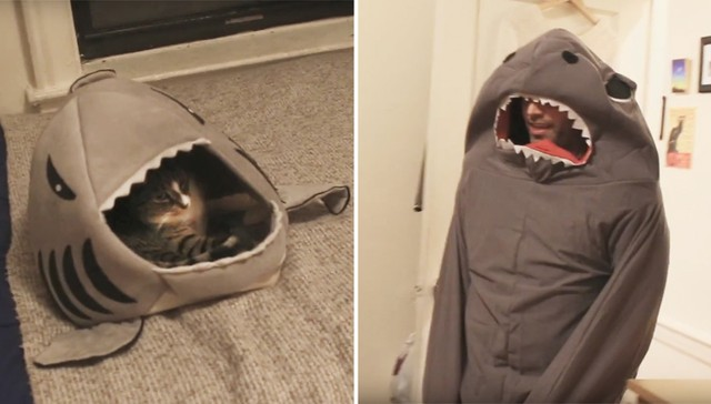 Comedian Dresses Up as Cat's Favorite Toy