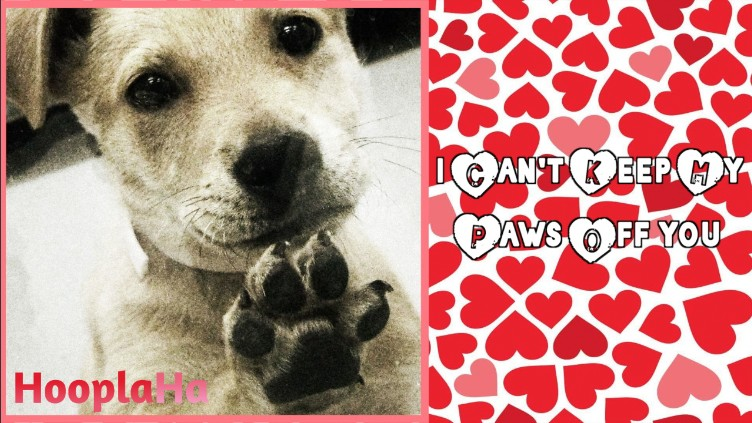 12 valentines day cards perfect the dog lover in your life - Photo Valentine Cards
