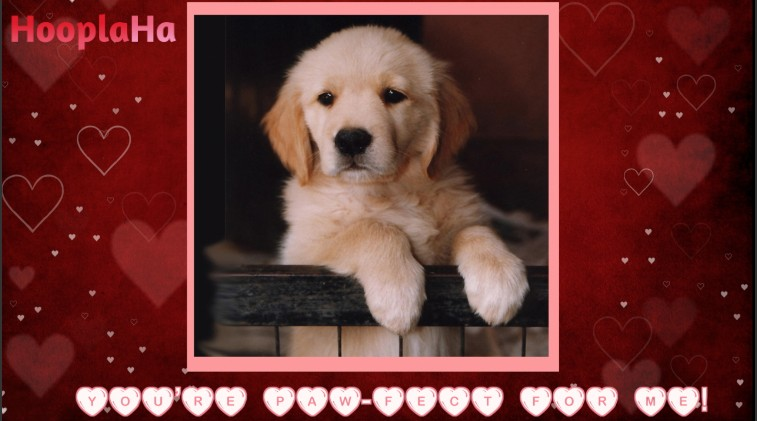 share using facebook - Dog Valentines Day Cards