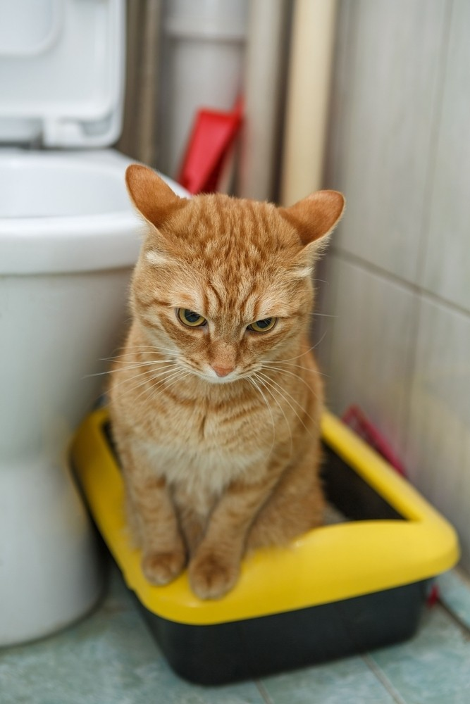 Should You Teach Your Cat To Use The Toilet