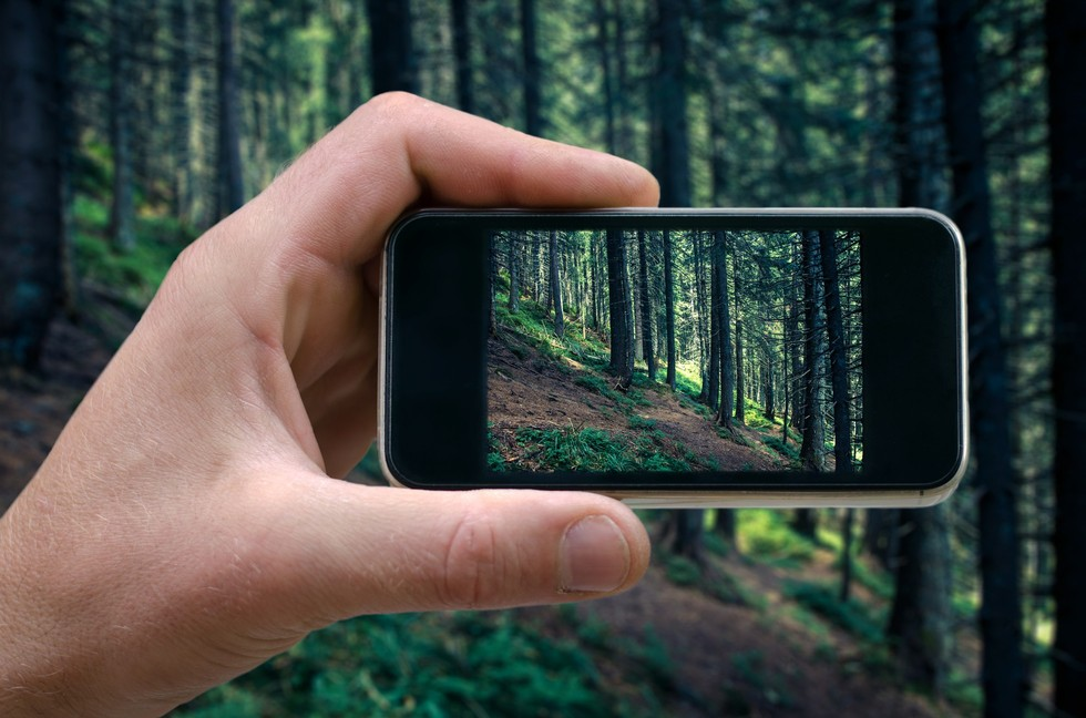 Photo of Phone in Forest