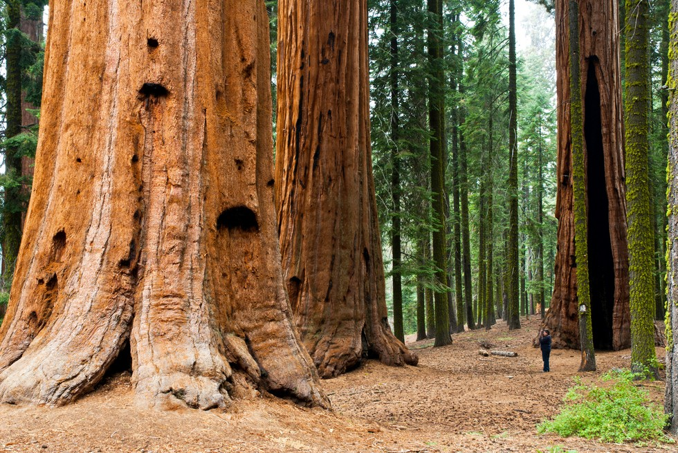red wood for gorgeous - photo #18