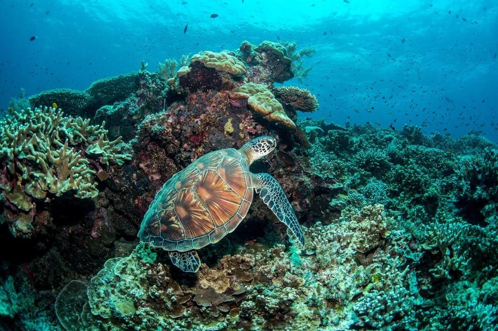Sulu Sea, Borneo, Malaysia