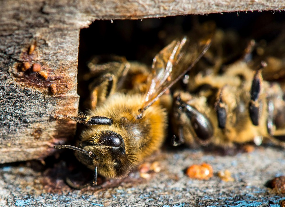 Ormskirk Beekeepers: Court Fails to Protect Bees From Toxic