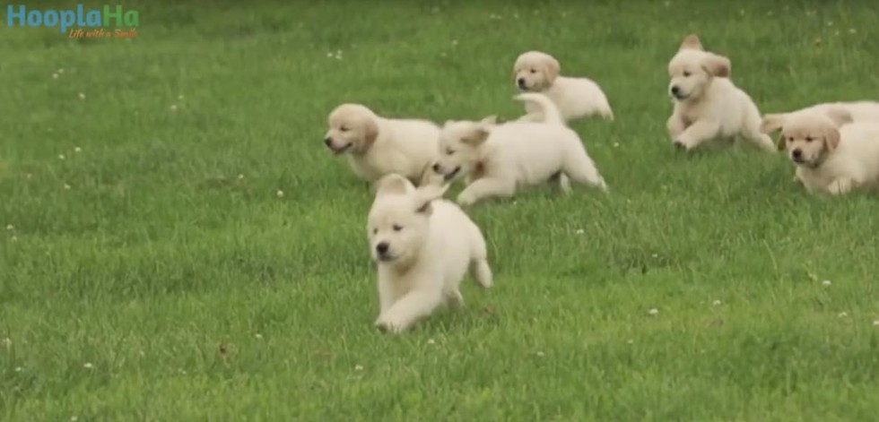 21 Adorable Puppies Go On An Adventure Only Good Tv Positive