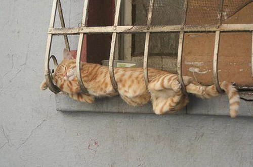 These Super Cozy Cats Have Totally Mastered The Art Of Napping ...