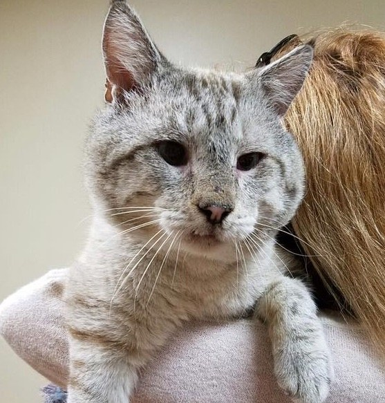 Can Humans Get Fiv From A Cat Bite