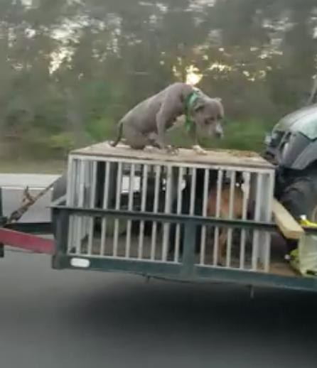 Owners ticketed after dog seen riding on trailer