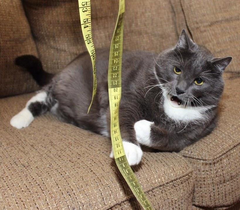 Кошка похудеть надо как