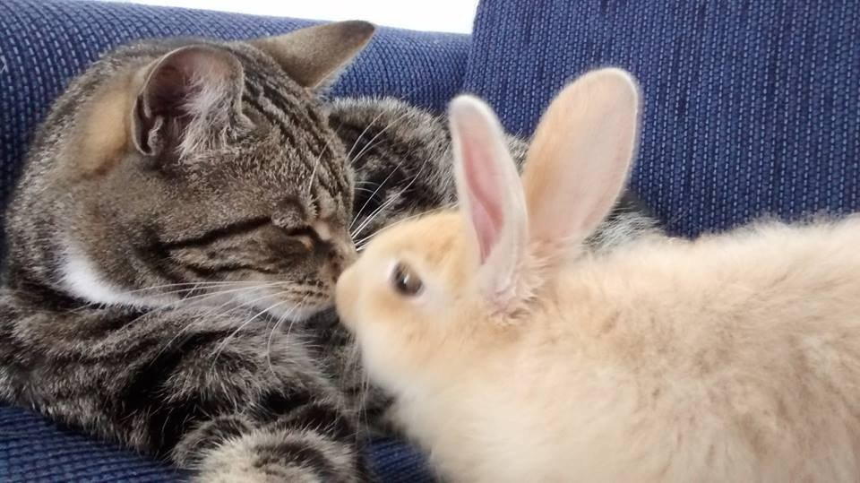 Cat Befriends Rabbit
