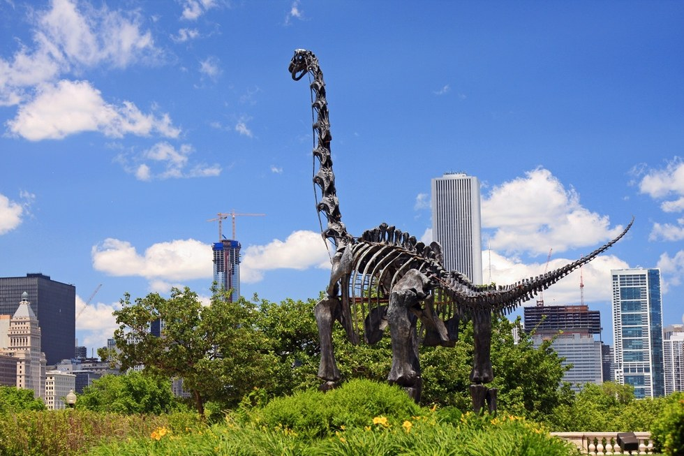 Brachiosaurus skeleton replica outside the Field Museum