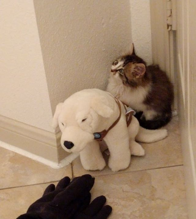 royal canin sensitive stomach cat