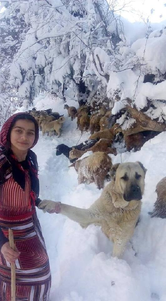 girl with goats and dog